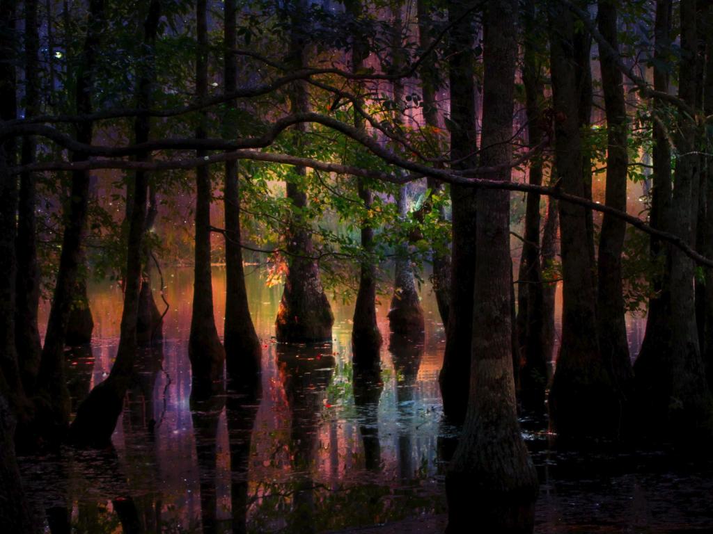 Fairie Swamp Garden echoroo Flickr original